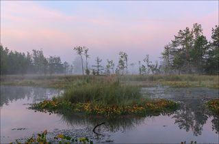 Розовое утро на торфяных болотах