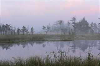 Утро на торфяных болотах