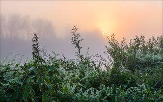 Восход с Колючеплодником