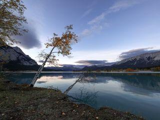 Необычайно высокая вода в озере застала врасплох деревья, беззаботно росшие по краям озера. Довольно далеко от обычной границы воды.