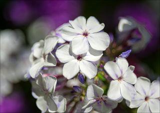 Житель цветочного дома
