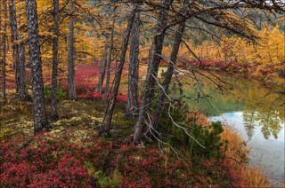 Осенние краски Пурги