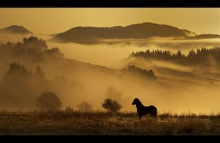 Morning with the Black horse