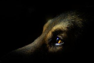 Arkan, my lovely dog :)