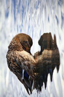 Сердце дикой природы