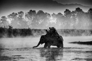 Слоновья переправа