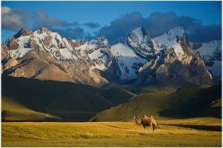 Верблюд на фоне хребта Сары-Белес