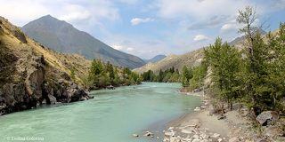 Река Аргут в районе с. Аргут. Алтай, Кош-Агачский район, август 2010 г.
