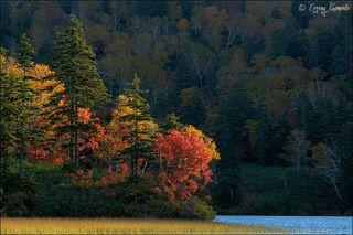 Солнце включает осень