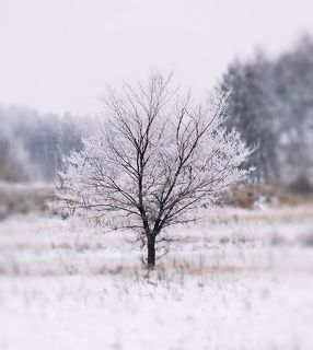 зимняя кроха