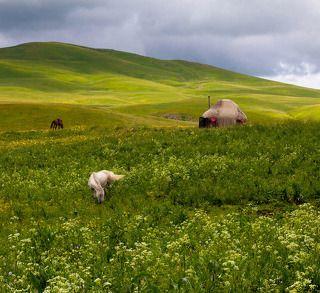 №3. Для лошадок здесь просто рай - вокруг бескрайние альпийские луга, почти круглый год полные сочной зелени. Знающие люди строят здесь свои коннозаводческие хозяйства.