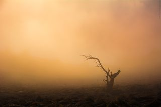 Щупальца в тумане :)