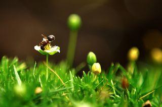 Мох и муравей