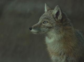 hunter / охотник