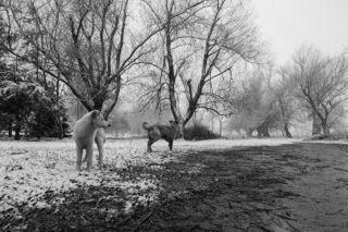Стая молодых бездомных псов искренне радовалась суровой погоде