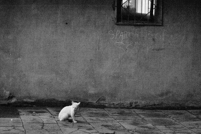 Кошка, двор Ушел дружокphoto preview