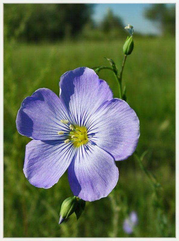 лето, цветы Привет от лета!photo preview