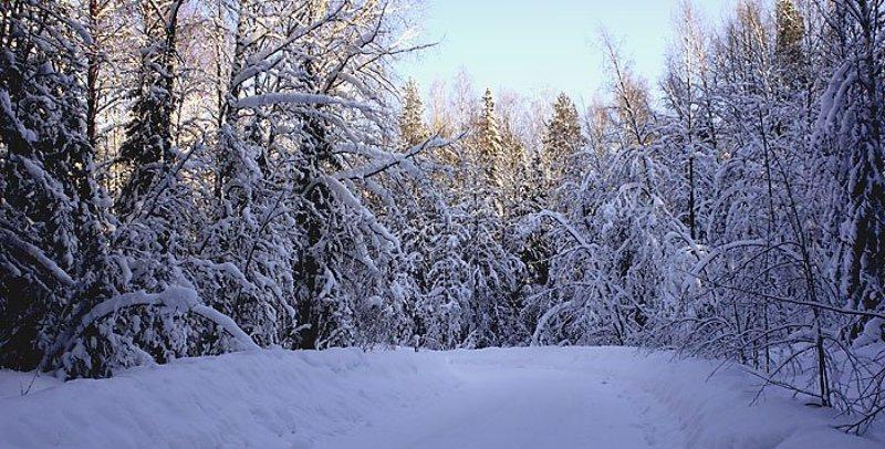 снег Коми мороз Снег на поворотеphoto preview