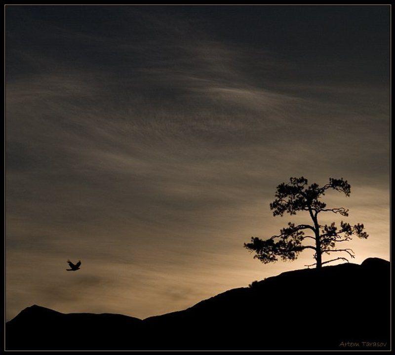 рассвет, дерево, птица, горы 7 минут до рассветаphoto preview