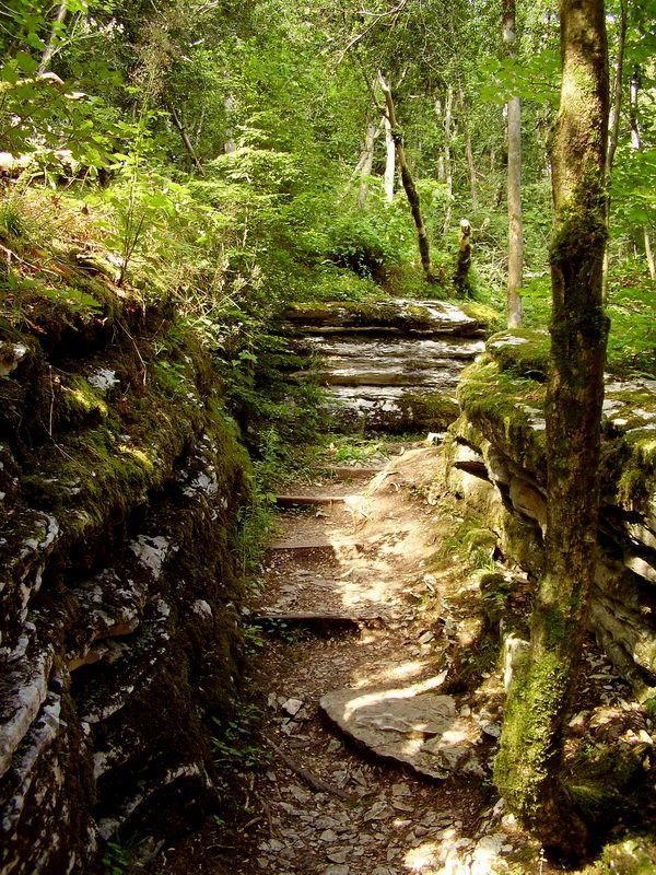 лето, тисо-самшитовая роща, лес Тисо-самшитовая роща. Лабиринтphoto preview