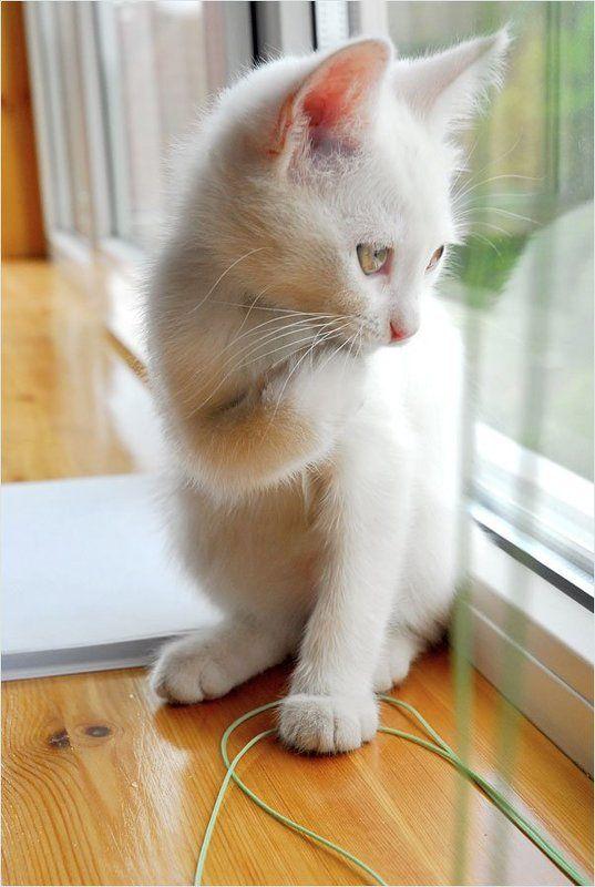 котенок Масяphoto preview