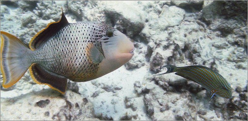 мальдивы рыбы Мальдивыphoto preview