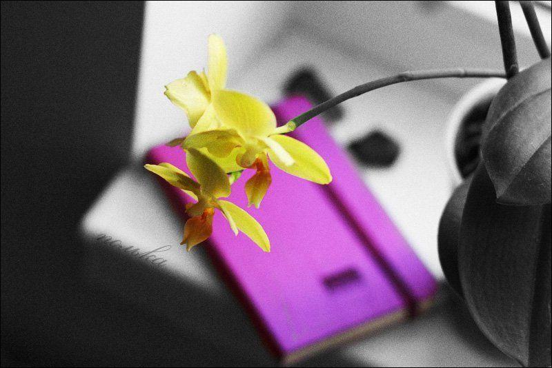 орхидея, окно, молескин, фиолетовый фиолетовые тайны.photo preview