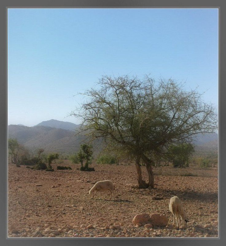 овцы, марокко, пастораль, пастух Марокканская пасторальphoto preview