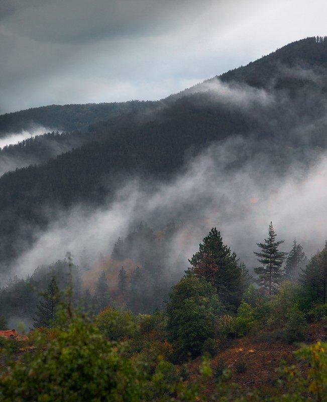 Воздышки лесаphoto preview