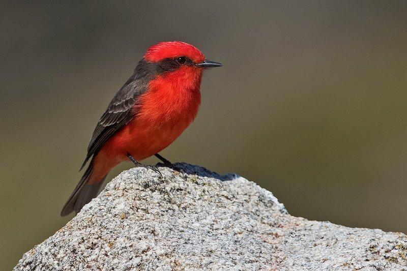 птицы, уругвай Огонекphoto preview