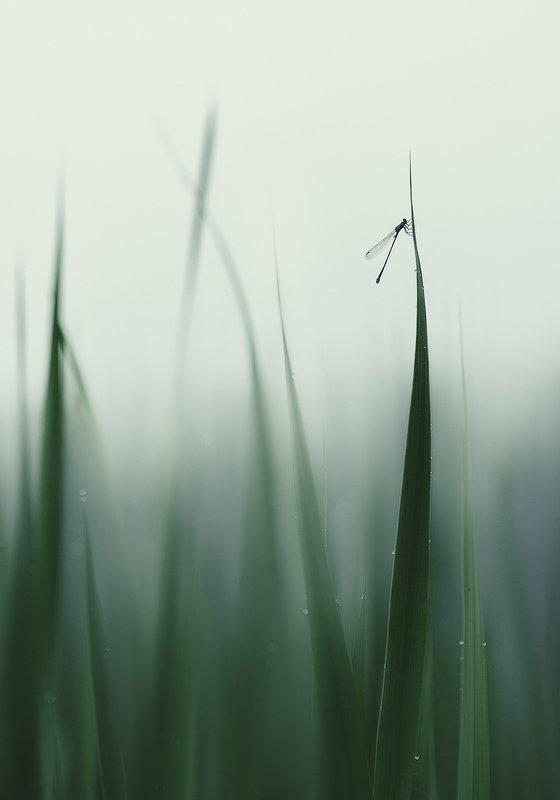 украина, коростышев, природа, первое озеро, трава, стрекоза, утро, туман, макро, макро красота, макро мир, макро истории, тишина, гармония, роса, безмолвие, фотограф, чорный, Среди уснувших трав...photo preview