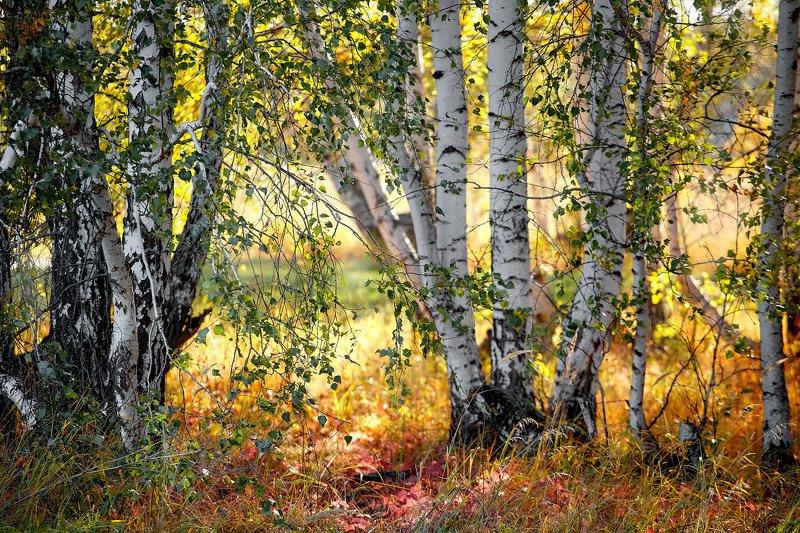 южный урал,оренбургская область, орск, новотроицк, Осенний лесphoto preview