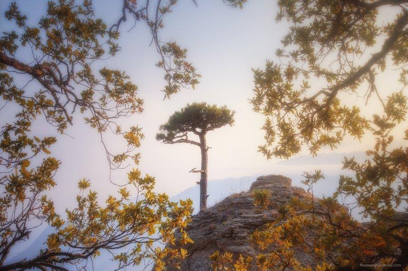 крым, демерджи, осень, фототуры по крыму, Одиноко стоящийphoto preview