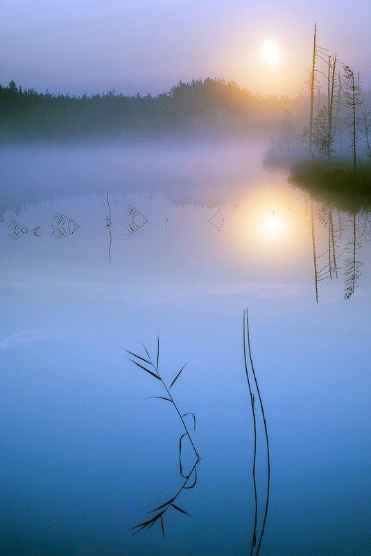 карелия в тишинеphoto preview