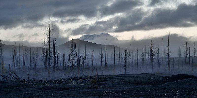 камчатка, горы, вулкан, пейзаж, природа, россия, дальний восток, туман, сумерки, лес, kamchatka, mountains, volcano, landscape, nature, russia, far east, fog, dusk, forest Мёртвый лесphoto preview