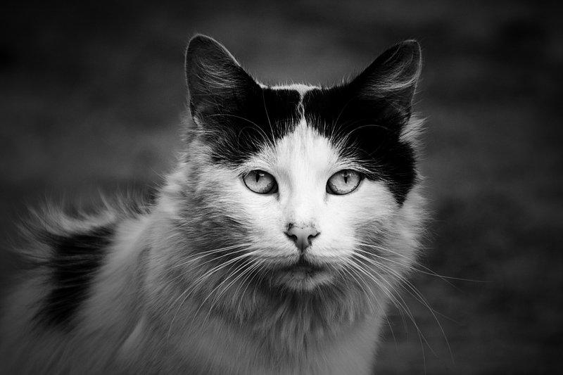 коты, бездомные коты, животные, черно-белое Суровая свобода.photo preview