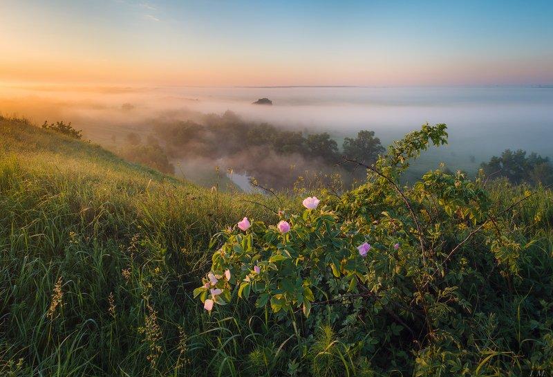 утро, рассвет, туман, река, Псёл, холмы, куст, шиповник, природа, пейзаж, тепло, foggy, morning, panorama, view, river, Psel, misty, light, fog, hills, landscape ***photo preview