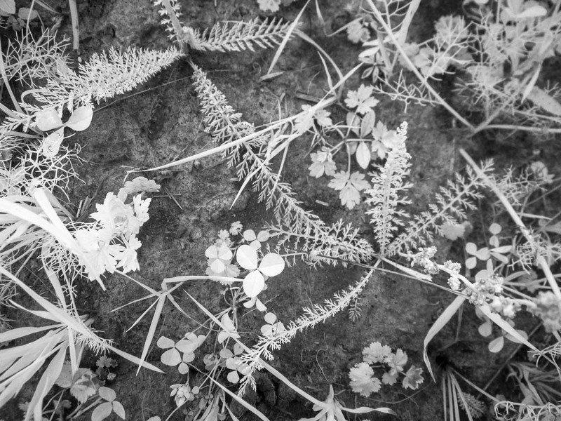 когда позовет тебя море, трава, ромашки, ладога, ir, карелия, растения Лето под ногамиphoto preview