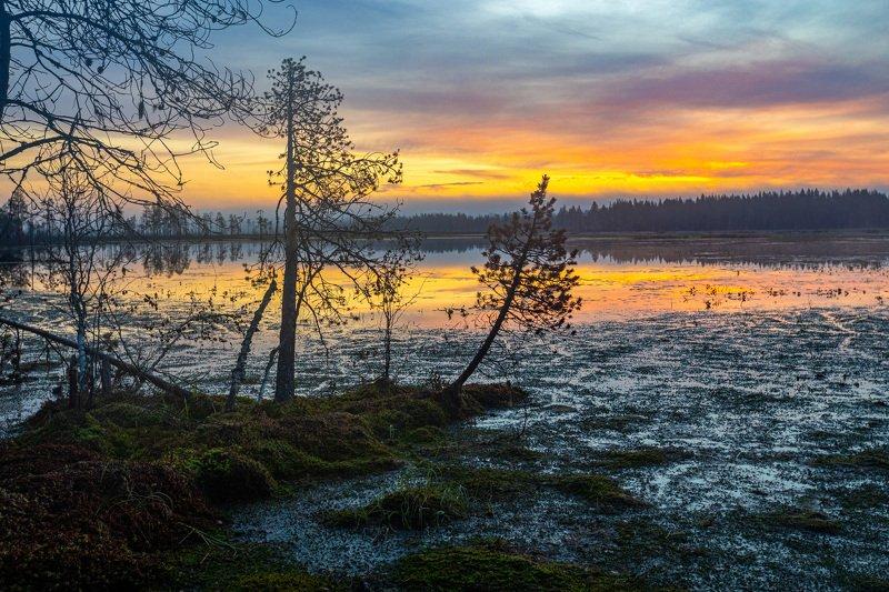 Восход на болотеphoto preview