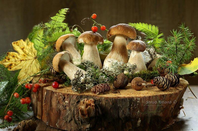 природа, грибы, пенек, листья, шишки Беленькиеphoto preview