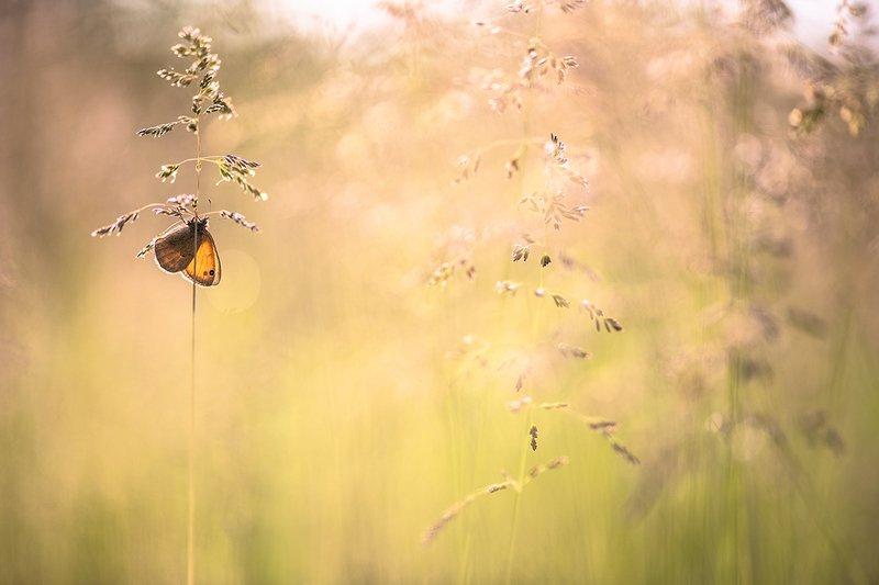 бабочка, утро, свет, цвет, позитив, лето, луг, воронеж Просто летнее утро...photo preview