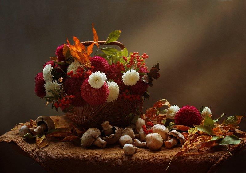 осень, натюрморт, астры, корзина, цветы, грибы Осеннее солнцеphoto preview