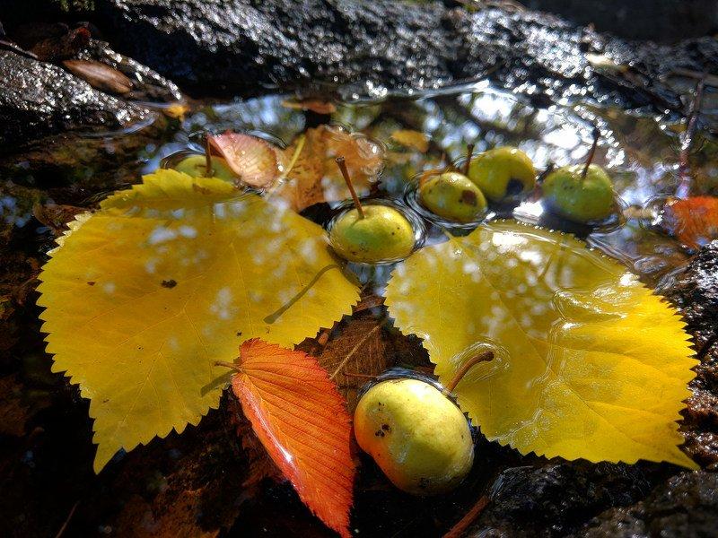 осень,листва,октябрь,макро,сюжет,желтый,натюрморт,отражение,вода,свет, Осенний этюдphoto preview