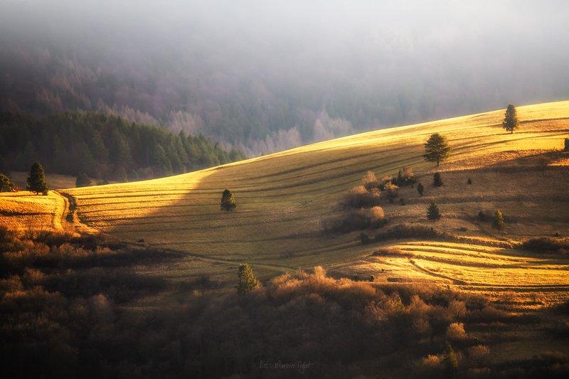Gold autumn.photo preview