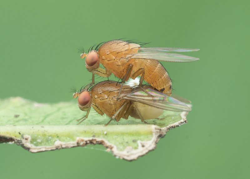 #macro#colors#mating Just Do It !photo preview