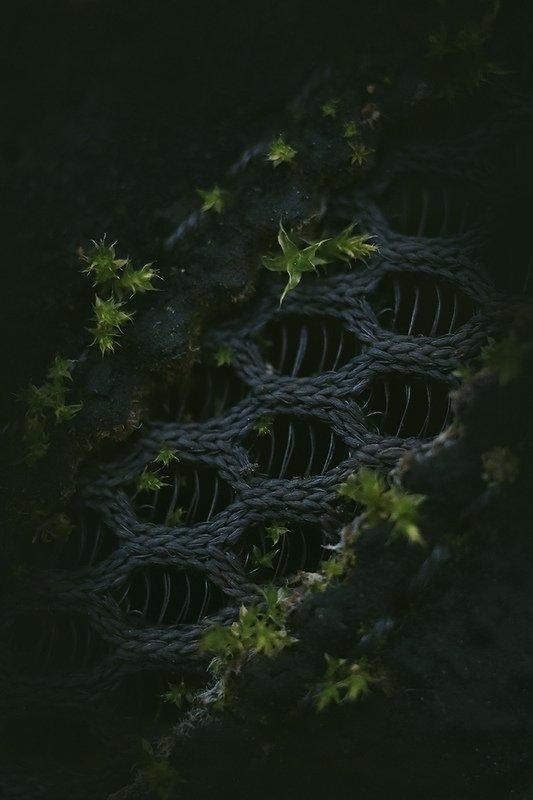 макро, мох Кроссовки, заросшие мхомphoto preview