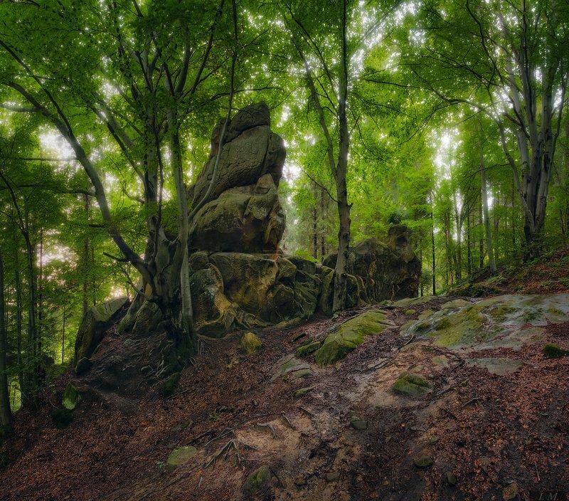 Тустань, лес, буки, буковый лес, скалы, вечер, мистика, камни, пейзаж, панорама, forest, rocks, stones, mystical, Tustan, Landscape, evening, panorama, photography Мистический лес Тустаниphoto preview