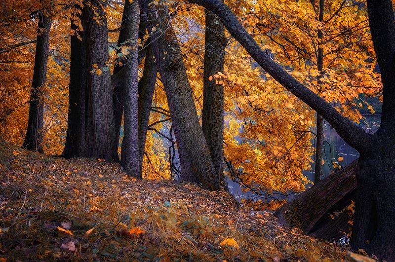 осень,природа,красота,пейзаж В осеннем нарядеphoto preview