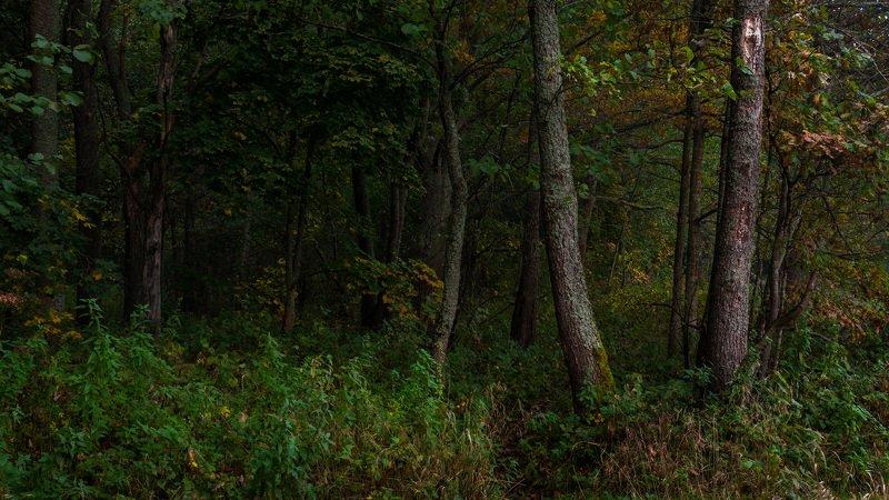Наброски октябряphoto preview