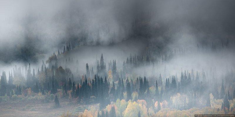 горнаяколывань, осеньнаалтае, алтай2020 Чернь - сибирский дождевой тропический лесphoto preview